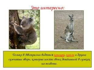 Это интересно: Только в Австралии водятся кенгуру, коала и другие сумчатые з