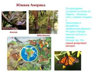 Южная Америка Анаконда Дебри Амазонки По природным условиям он похож на Афри