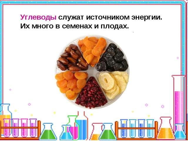 Углеводы служат источником энергии. Их много в семенах и плодах.