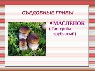 СЪЕДОБНЫЕ ГРИБЫ МАСЛЕНОК (Тип гриба - трубчатый)