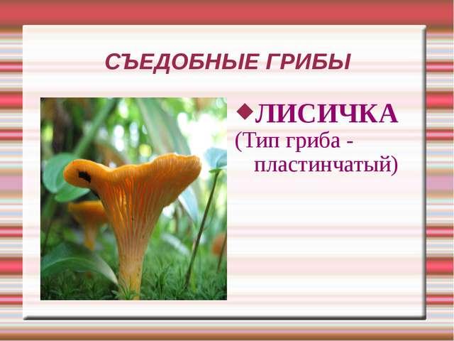СЪЕДОБНЫЕ ГРИБЫ ЛИСИЧКА (Тип гриба - пластинчатый)