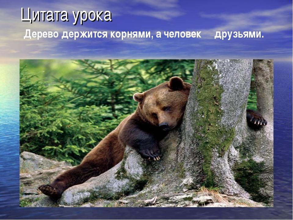 Цитата урока Дерево держится корнями, а человек друзьями.