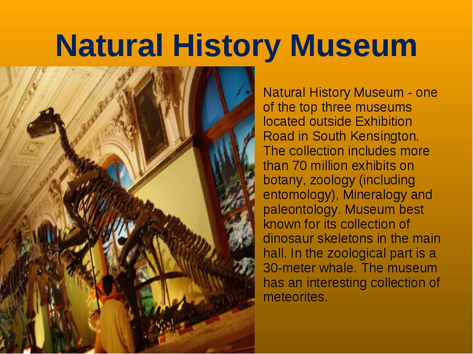 Natural History Museum Natural History Museum - one of the top three museums...