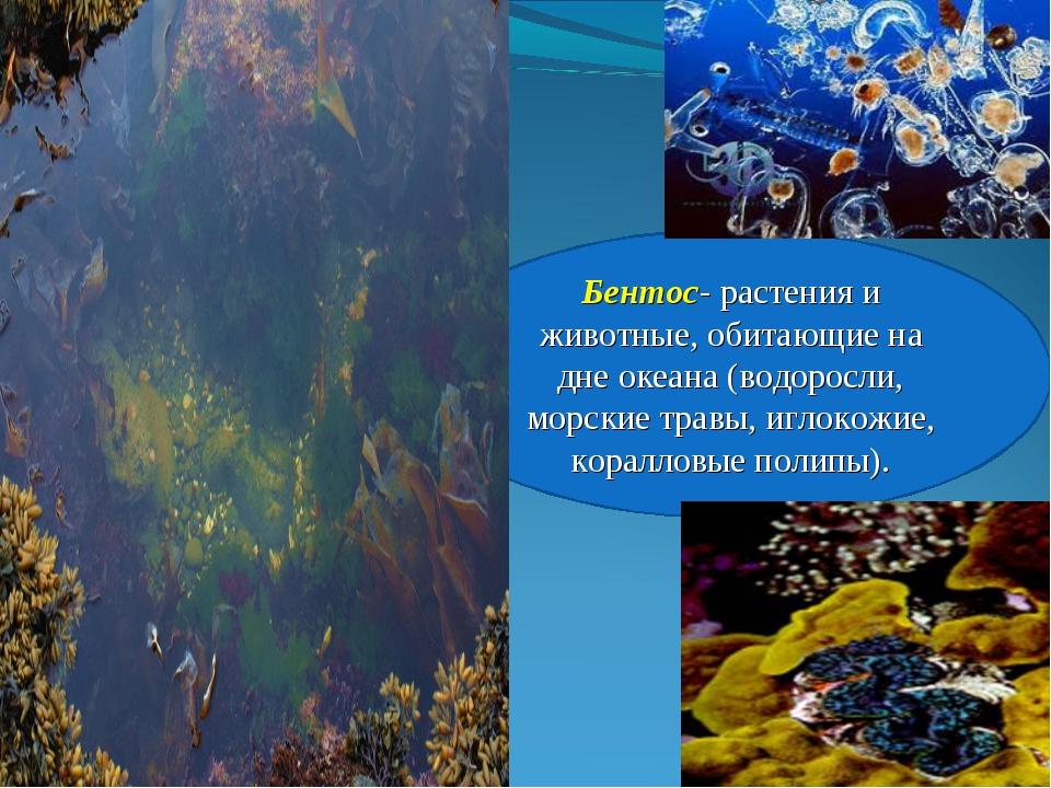 Бентос- растения и животные, обитающие на дне океана (водоросли, морские трав...