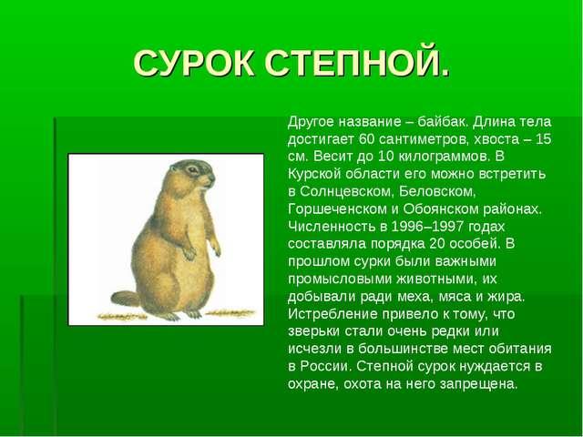 СУРОК СТЕПНОЙ. Другое название – байбак. Длина тела достигает 60 сантиметров,...