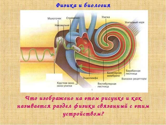 Физика и биология Что изображено на этом рисунке и как называется раздел физи...