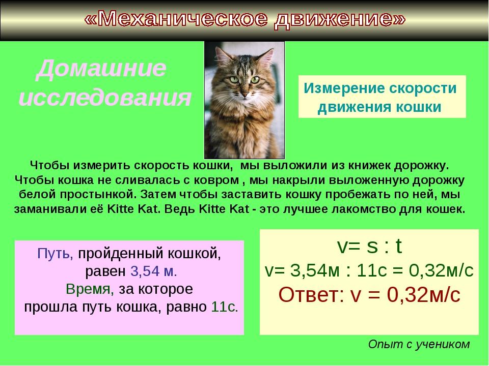 Домашние исследования Измерение скорости движения кошки Чтобы измерить скорос...