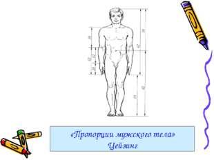 «Пропорции мужского тела» Цейзинг