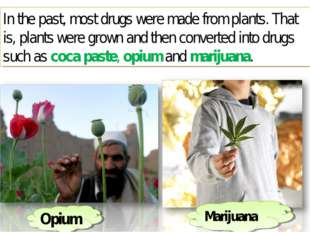 In the past, most drugs were made from plants. That is, plants were grown and