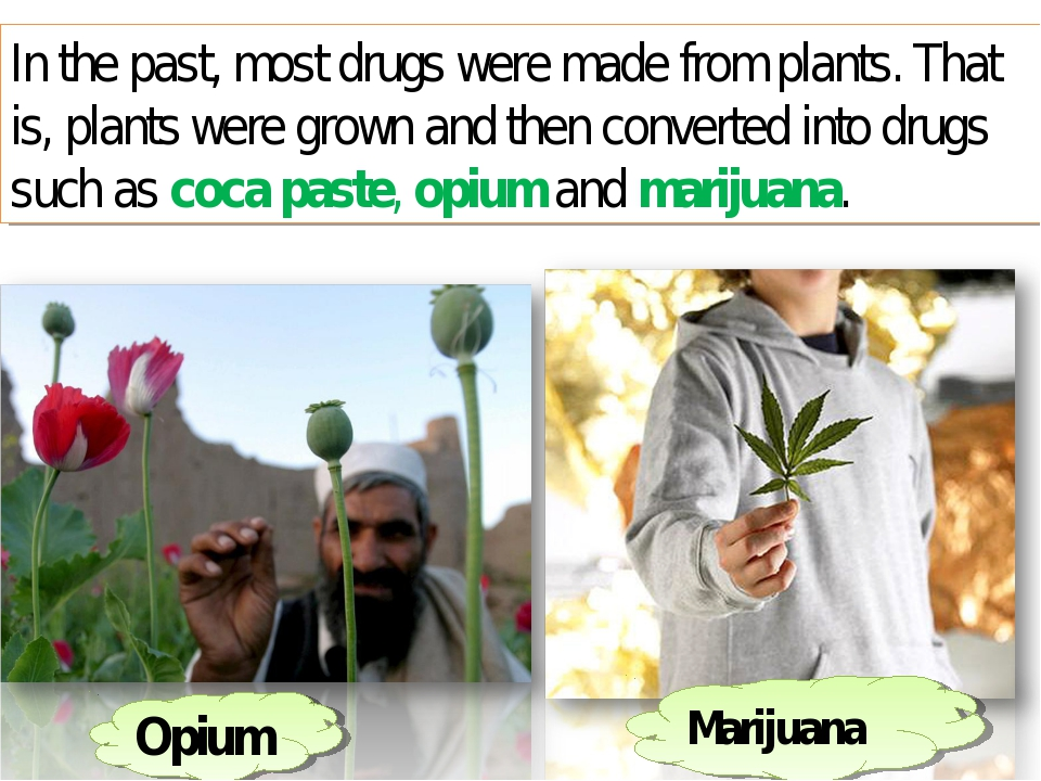 In the past, most drugs were made from plants. That is, plants were grown and...