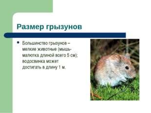 Размер грызунов Большинство грызунов – мелкие животные (мышь-малютка длиной в