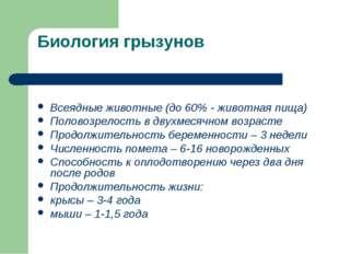 Биология грызунов Всеядные животные (до 60% - животная пища) Половозрелость в