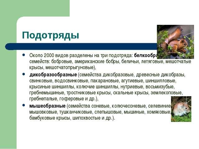 Подотряды Около 2000 видов разделены на три подотряда: белкообразные (6 семей...