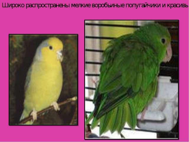 Широко распространены мелкие воробьиные попугайчики и красивые.