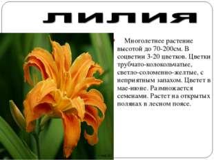 Многолетнее растение высотой до 70-200см. В соцветии 3-20 цветков. Цветки тр