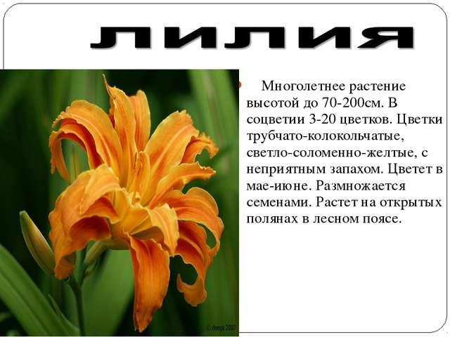 Многолетнее растение высотой до 70-200см. В соцветии 3-20 цветков. Цветки тр...