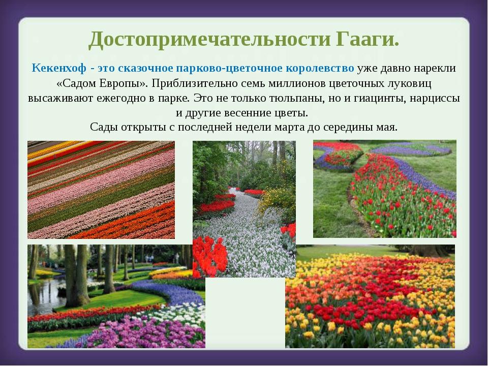 Достопримечательности Гааги. Кекенхоф - это сказочное парково-цветочное корол...