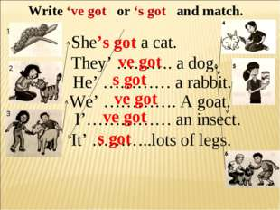 Write 've got or 's got and match. She's got a cat. They' ………. a dog. He' ………