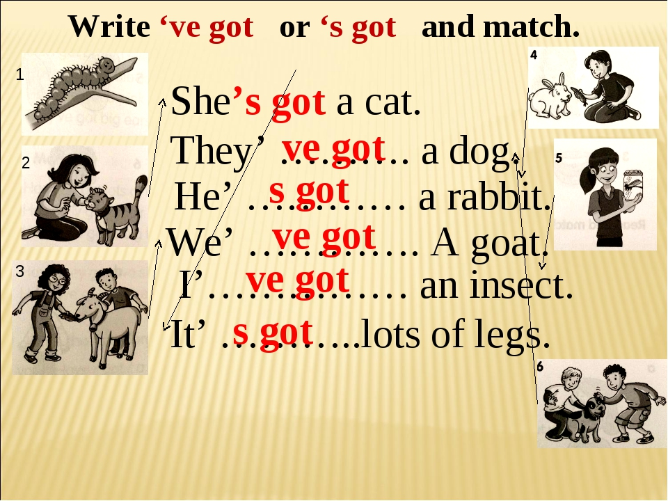 Write 've got or 's got and match. She's got a cat. They' ………. a dog. He' ………...