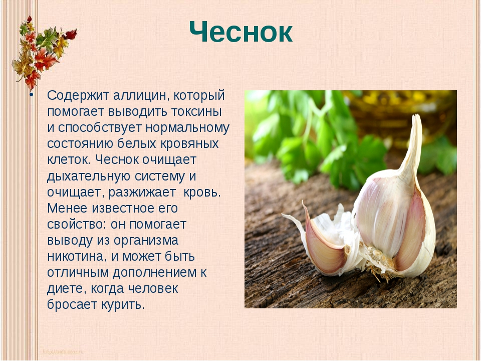 Чеснок Содержит аллицин, который помогает выводить токсины и способствует нор...