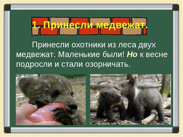 Принесли охотники из леса двух медвежат. Маленькие были! Но к весне подросли...