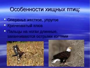 Особенности хищных птиц: Оперенье жесткое, упругое Крючковатый клюв Пальцы на