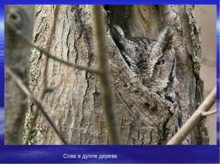Сова в дупле дерева