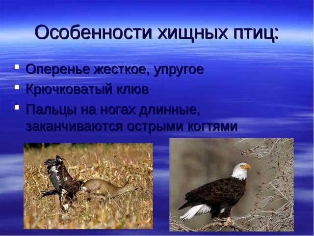 Особенности хищных птиц: Оперенье жесткое, упругое Крючковатый клюв Пальцы на...