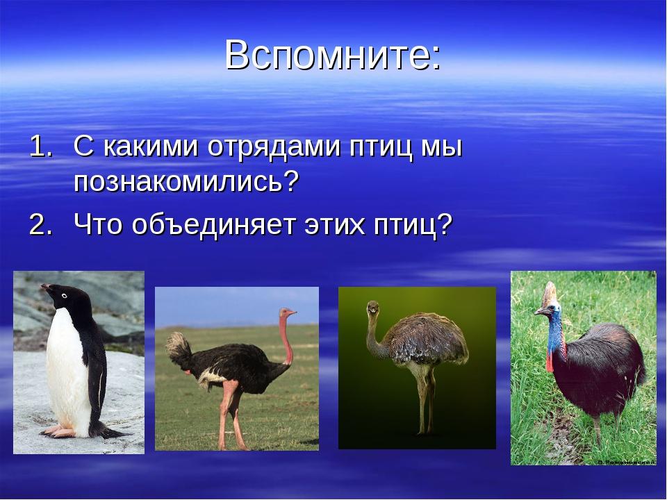 Вспомните: С какими отрядами птиц мы познакомились? Что объединяет этих птиц?
