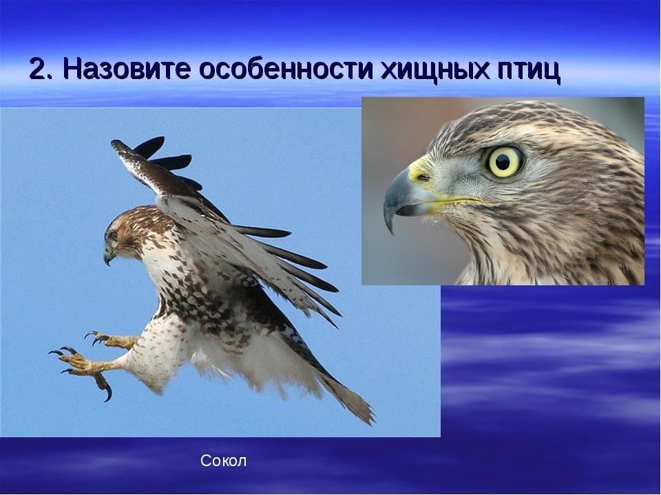 2. Назовите особенности хищных птиц Сокол