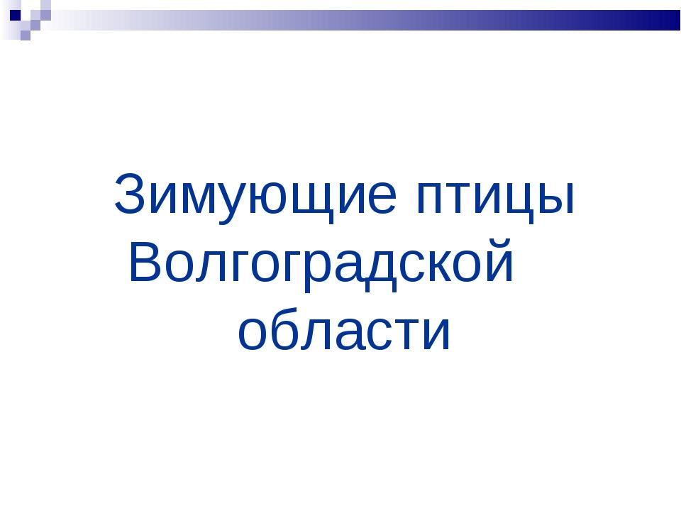 Зимующие птицы Волгоградской области