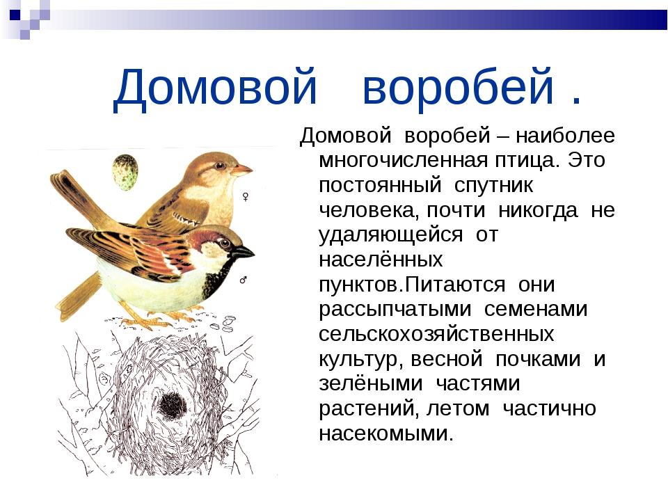 Домовой воробей . Домовой воробей – наиболее многочисленная птица. Это посто...