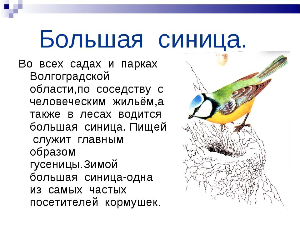 Большая синица. Во всех садах и парках Волгоградской области,по соседству с...