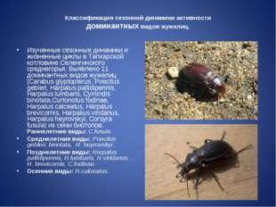 Классификация сезонной динамики активности доминантных видов жужелиц. Изученн