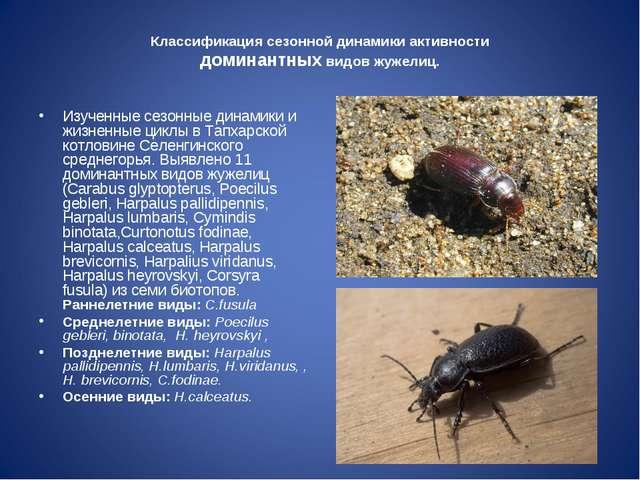 Классификация сезонной динамики активности доминантных видов жужелиц. Изученн...