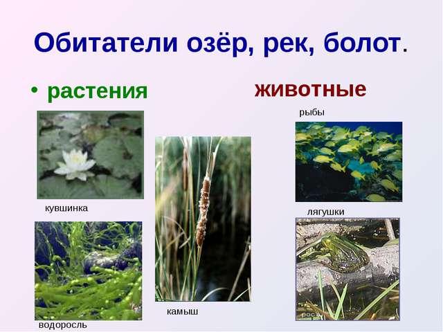 Обитатели озёр, рек, болот. растения животные кувшинка водоросль камыш рыбы л...
