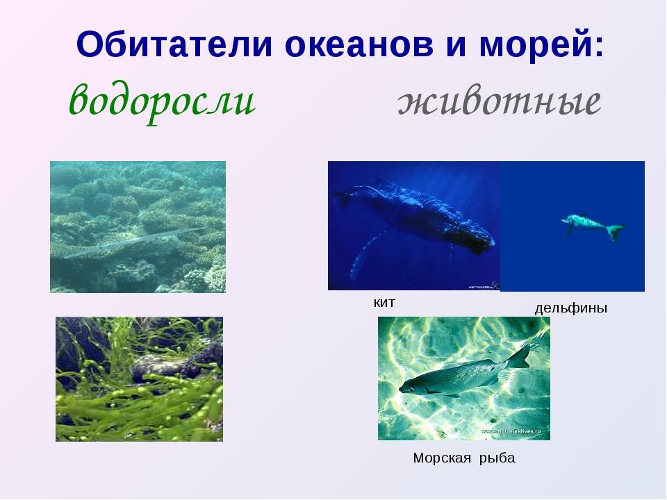Обитатели океанов и морей: водоросли животные кит дельфины Морская рыба