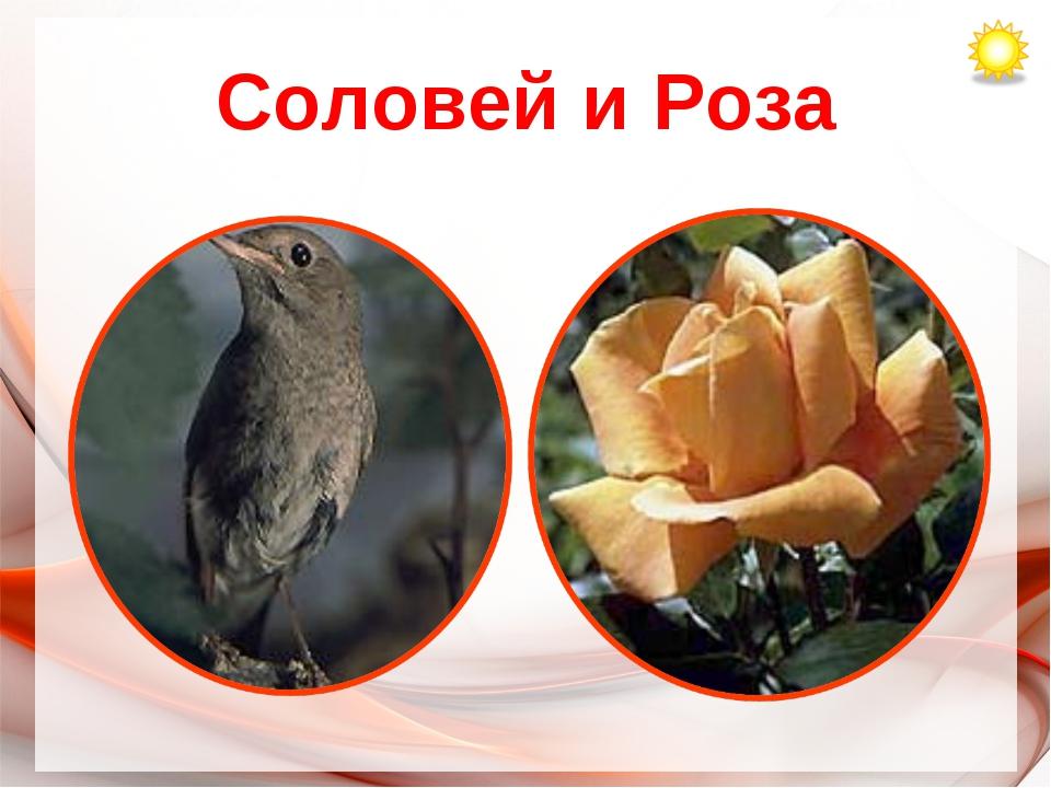 Соловей и Роза