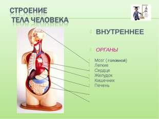 ВНУТРЕННЕЕ ОРГАНЫ Мозг ( ГОЛОВНОЙ) Легкие Сердце Желудок Кишечник Печень