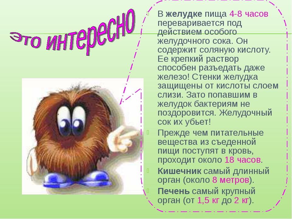 В желудке пища 4-8 часов переваривается под действием особого желудочного сок...