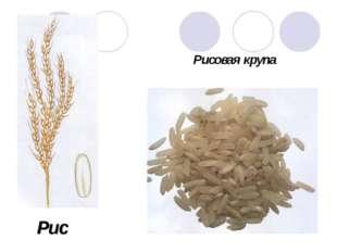 Рис Рисовая крупа