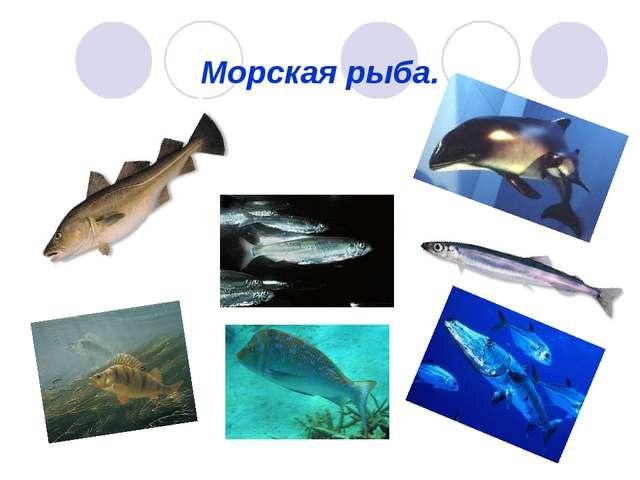 Морская рыба.