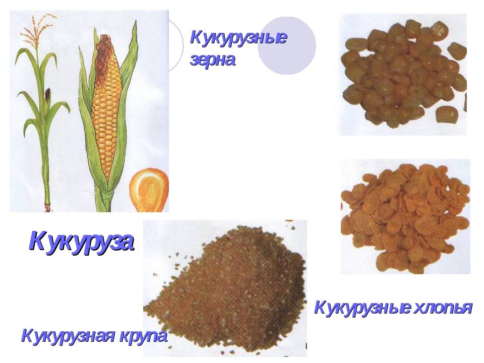 Кукуруза Кукурузная крупа Кукурузные хлопья Кукурузные зерна