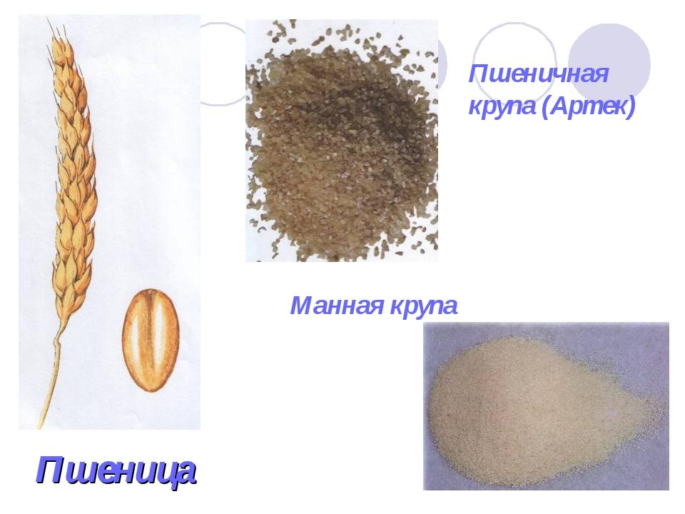 Пшеница Пшеничная крупа (Артек) Манная крупа