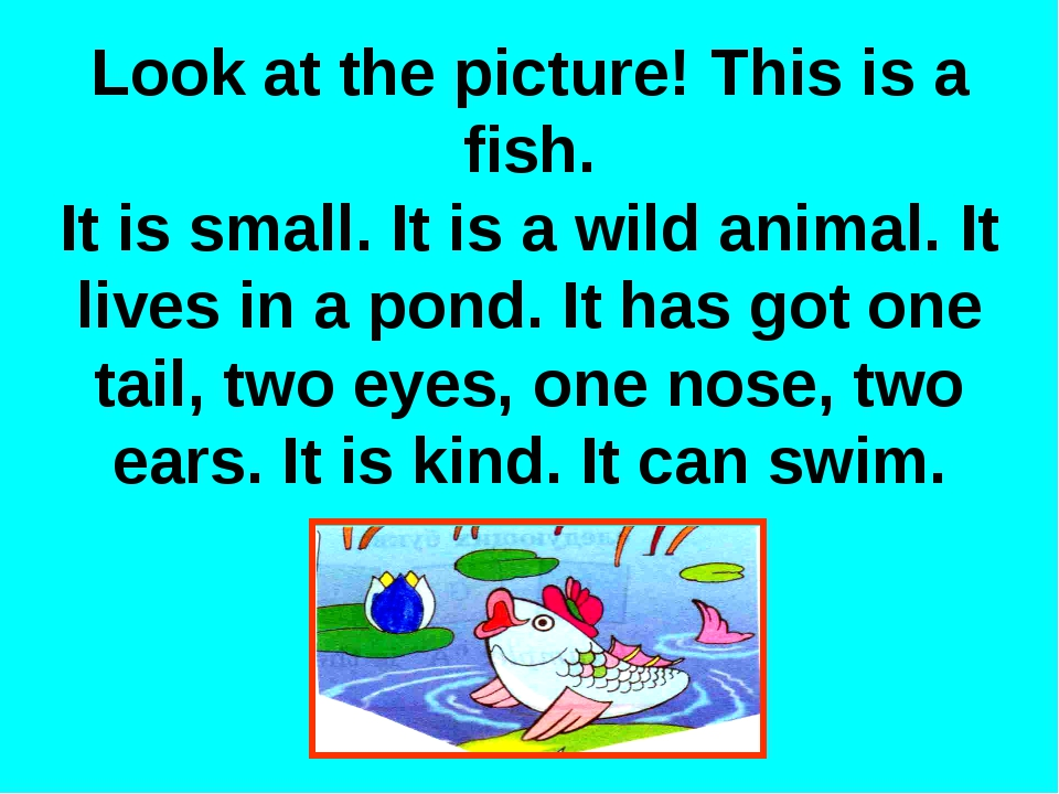 Look at the picture! This is a fish. It is small. It is a wild animal. It liv...