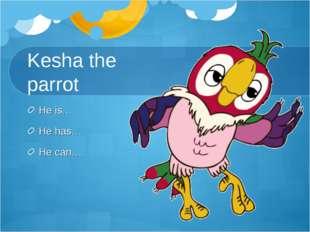 Kesha the parrot He is… He has… He can…
