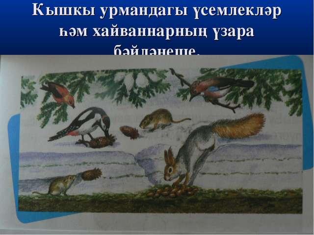 Кышкы урмандагы үсемлекләр һәм хайваннарның үзара бәйләнеше.