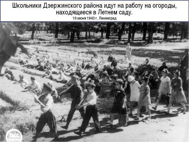 Школьники Дзержинского района идут на работу на огороды, находящиеся в Летнем...