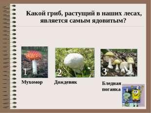 Какой гриб, растущий в наших лесах, является самым ядовитым? 1 Мухомор 2 Дож