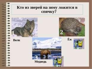 Кто из зверей на зиму ложится в спячку? 1 2 3 Волк Ёж Медведь